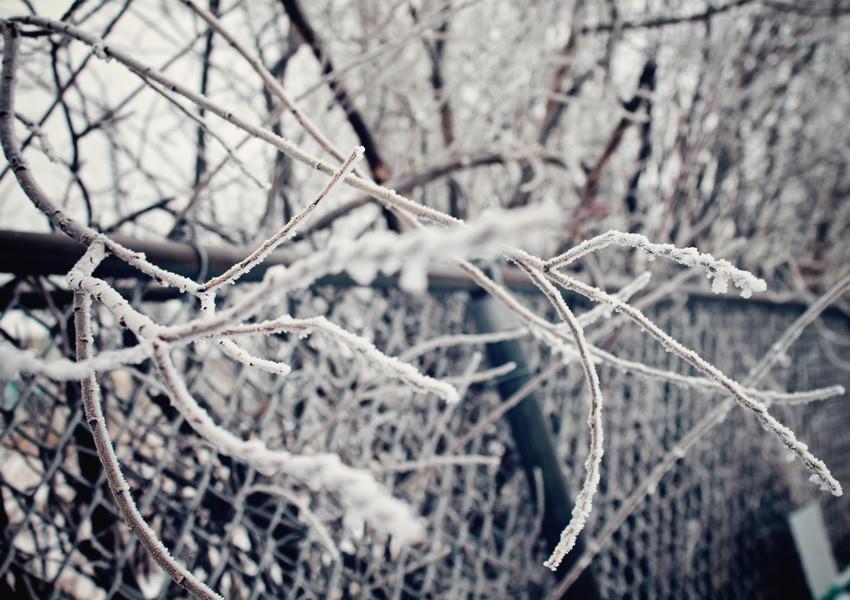 103-winnipeg-frost