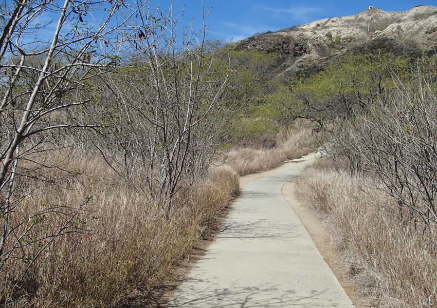 117-diamondhead-trees-path-start
