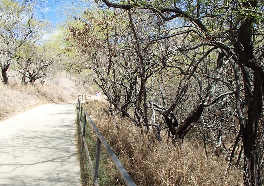 117-diamondhead-trees-path